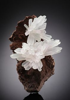 A neat beautiful specimen of two divergent sprays of milky-white slender Quartz crystals to nearly 2 cm set on a chocolate-brown, fine-grained basaltic matrix. The specimen is from Iraí, Brazil