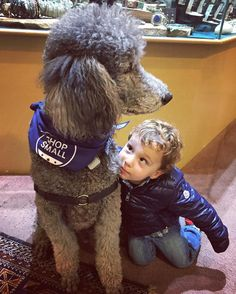 We think Tucker turned two year old Theo into a life long dog lover! How sweet is the relationship between humans and dogs, they truly are mans best friend ❤️ #peacelovegoodvibes #paradisefoundsb #poodlelove #poodlesofig #shopsmall #smallbusinesssaturday #supportsmallbusiness #shoplocal #gratitude