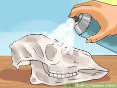 Image titled Preserve a Skull Step 9 Deer Skull Decor, Painted Deer Skulls, Deer Hunting Decor, Cow Skull Art, Hunting Dogs, Horse Skull, Hunting Camo, Coyote Hunting, Pheasant Hunting