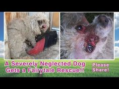 ▶ A Severely Neglected Dog Gets A Fairytale Rescue - Please Share! - YouTube - Transformation from just a little care!