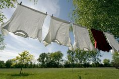 fresh clean scent drying in the breeze