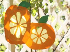 Citron Sun Catchers are a cute idea for Sukkot decorations that the kids can make to hang up. And this is super easy, just need a piece of parchment paper!