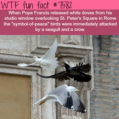 Symbol of peace - WTF fun facts