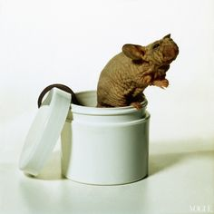 Vogue, June 1991  The rhino mouse, a star player in a great skin-care discovery in the 1990s.  Photographed by Irving Penn