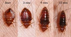 Are you disturbed to see bed bugs on the couch? Thinking on the ways to rid of those parasites? Get authentic bed bug measures from the leading pest control agency of Perth to keep the creepy parasites away.