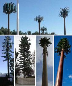 http://weburbanist.com/wp-content/uploads/2010/03/fake-trees-hiding-cell-towers.jpg