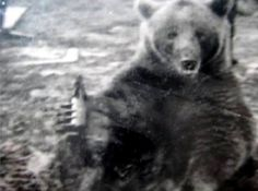 Article on a Polish Bear Soldier who battled the Nazi's http://awartobewon.com/wwii-articles/wojtek-bear-soldier-battled-nazis%e2%80%8f/