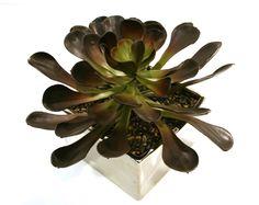 Artificial Aeonium Succulent in Low Silver Dish Garden Dish Garden, Artificial Succulents, Plants, Silver, Color, Design, Money, Planters, Colour