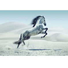 """47.2 in. H x 63 in. W """"White Stallion I"""" Artwork in Tempered Glass Wall Art"""