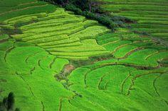 Pirinčana polja u Butanu / Bhutan Rice Paddies Bhutan, Vineyard, Rice, Outdoor, Outdoors, Vine Yard, Vineyard Vines, Outdoor Living, Garden