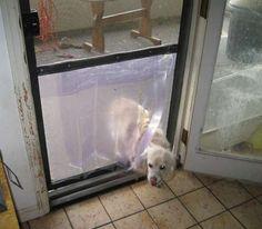 make your own doggie door from a screen door. diy.