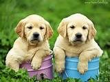 nice way, to let now a gender of the puppy`s haha!!