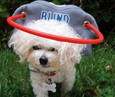 Muffin's Halo Guide for Blind Dogs (and Cats) - Patented blind dog product vets are recommending