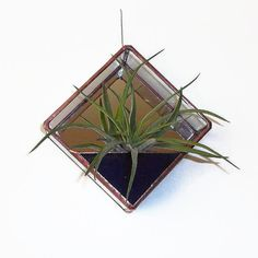 Stained Glass Air Plant Terrarium Kit
