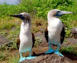 We really want to take a guided REI trip to the Galapagos.  We were hoping for this year, but it will probably be 2014 instead.