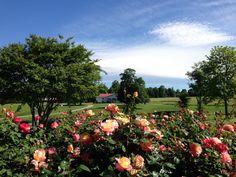 Laurel Gray Vineyards in North Carolina