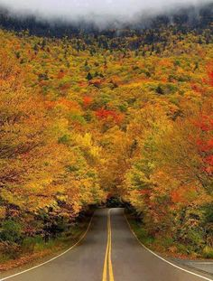 Autumn Tree Tunnel, Smugglers Notch State Park, Vermont, USA