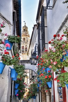 Cordoba, Spain (photo by A.Karońska) www.mymalaga.pl