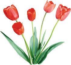 Картинки по запросу тюльпан