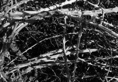 ...thorns... #photografy #blackandgray  #cosegiaviste
