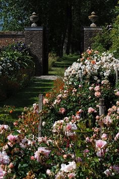 Rymans - Open Garden | West Sussex