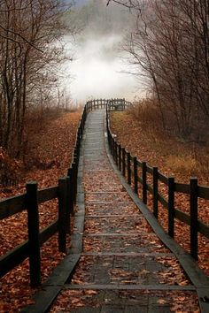 I could just walk down this path with a nice toasty warm jacket and a cuppa tea, with the wind nipping at my nose and making my eyes sparkle at the pretty leaves and mist.