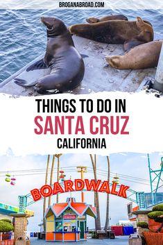 Usa Travel Guide, Travel Usa, Travel Tips, Travel Abroad, Travel Guides, Santa Cruz California, California Travel, California Attractions, Northern California