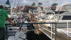 Game fishing Vessels geared up on Day 3 of Port Macquarie Golden Lure - Port Macquarie Marina in Port Macquarie, NSW Port Macquarie, Fishing Vessel, Fishing Tournaments, Shotgun, Great Places, Game, Building, Travel, Viajes