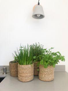 Potted Plants, Garden Plants, Planter Pots, Kitchen, Diy, Furniture, Decorating Ideas, Home, Gardening