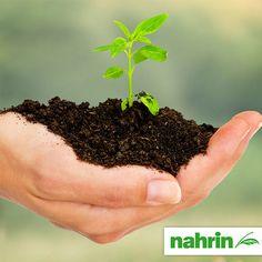 Produkte von Nahrin tun Gaumen und Körper gut. Und der Umwelt. Denn bereits bei der Gründung setzten wir auf umweltschonende Technologien.   Wussten Sie? Nahrin setzt auf 100% erneuerbare Energien und nutzt Strom aus Wasserkraft. Statt mit Erdöl heizen wir mit Wärmepumpen. Ausgeklügelte Wärme-Rückgewinnungssysteme reduzieren den CO2-Ausstoss weiter. Canning, Plants, Hydroelectric Power, Food Items, Sustainability, Things To Do, Products, Pool Chairs, Plant
