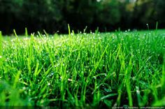 Helpful hints on how to prep your lawn for spring!
