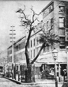 A pear tree planted by Peter Stuyvesant in 1647. It stood at the corner of 3rd ave and 13th street in Manhattan until 1867.