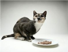 Top Five Cat Foods