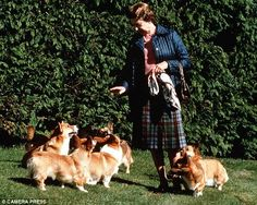 the queen and her corgis.