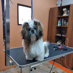 Ο φίλος μας ο Λίντο ήρθε για τον καλλωπισμό του! -->www.petshop.gr<-- . . Follow us: @houseofpetsxatzopoulos . . #dog #dogs #puppy #dogstagram #instadog #pet #pets #loveanimals #doglovers #cutedog #dogofthedy #dogofinstagram #lovedogs #lovepets #skilos #skylos #katoikidia #σκυλος #κατοικιδια #petgrooming #houseofpets #petshopgreece #petshop #pet_shop_gr Love Dogs, Animals, Animales, Animaux, Animal, Animais