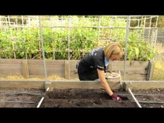 Planting & Growing Potatoes (tips for growing in smart pots)