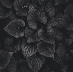 black leaves all black texture B&w Wallpaper, Wallpaper Fofos, Black Wallpaper, Nature Wallpaper, Wallpaper Ideas, Dark Wallpaper Iphone, Leaves Wallpaper, Black Aesthetic Wallpaper, Metallic Wallpaper