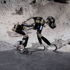 #Robot #baboon... for the #Moon ?
