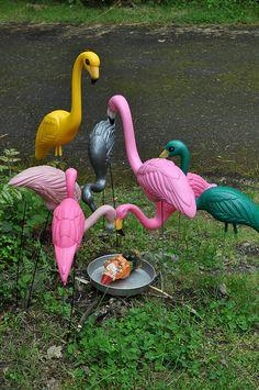 Flamingos attack, via Flickr
