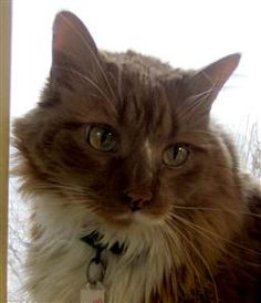 Cat named Pudding rescues owner hours after adoption - today > news - today > news > good_news - TODAY.com
