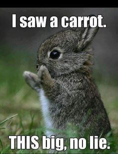 Soo itty bitty and cute. Gosh now I want a bunny!
