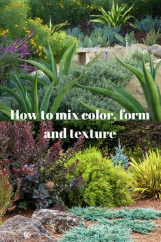 One of the secrets of a great design in the garden is to create a successful contrast of the three elements of color, form and texture.