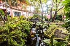 Beauty surrounds us, have a take a look at Alta Cebu Resort Garden to know the definition of beauty. Cebu, Oasis, Garden, Travel, Inspiration, Beauty, Biblical Inspiration, Garten, Viajes