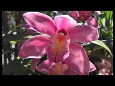 Yoga nidra, relaxation-méditation de 20min, rotation de la conscience - YouTube