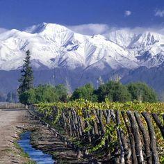 Vineyards in Mendoza, Argentina.