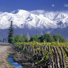 Vineyards in Mendoza, Argentina.