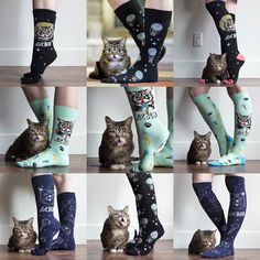 All these magical new BUB SOCKS (and a lot more stuff) are now available at the link in BUB's bio or at www.lilbub.com/store  As always a portion of every sale benefits Lil BUB's Big FUND for special needs pets which just reached $200000 this month! #lilbub #bubsocks #goodjobbub #bubstuff by iamlilbub