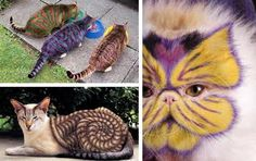 cats with unusual patterns, stripes, creative pet grooming ideas ------------------------------------------------ I'm not sure if this is right---Opinions??