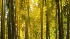 steigerwald Bayern | Lob und Kritik für dritten Nationalpark in Bayern…