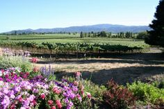 Love the Napa Valley!